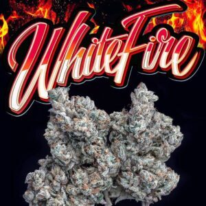 Buy jungle boys White Fire weed