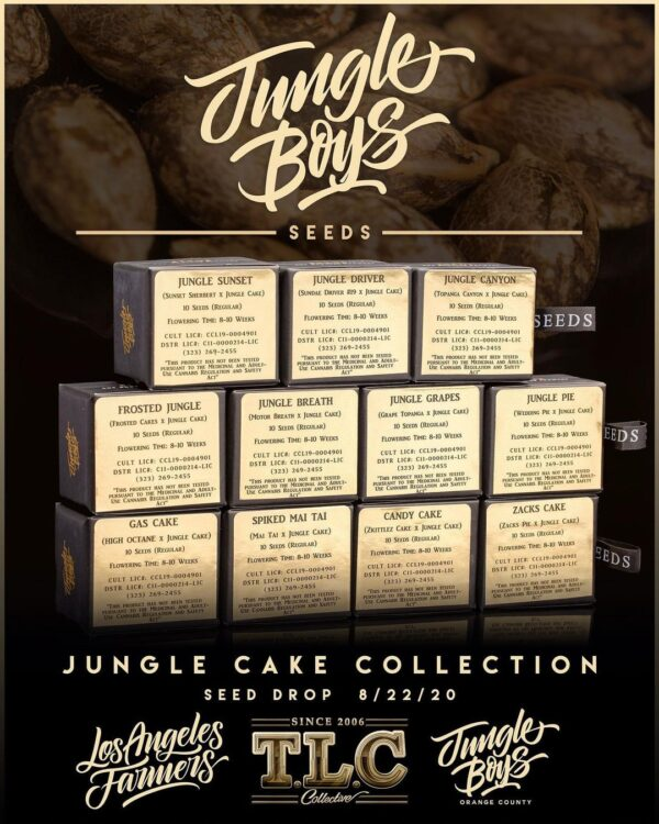 Buy jungle boys seeds